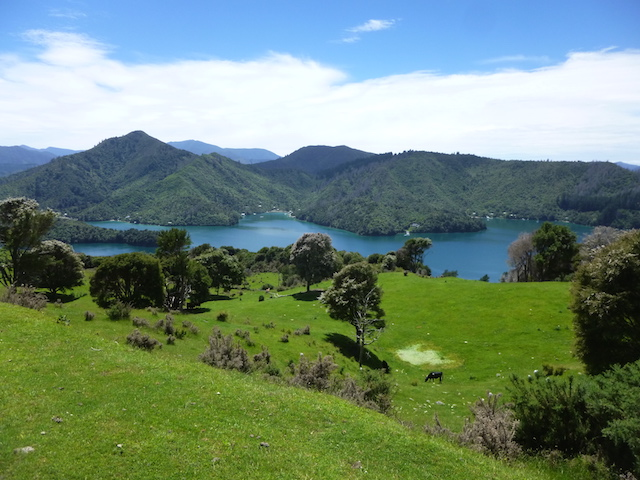 Queen Charlotte Track Neuseeland